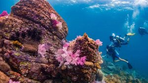 Best Places for Snorkeling and Scuba Diving in Thailand 1