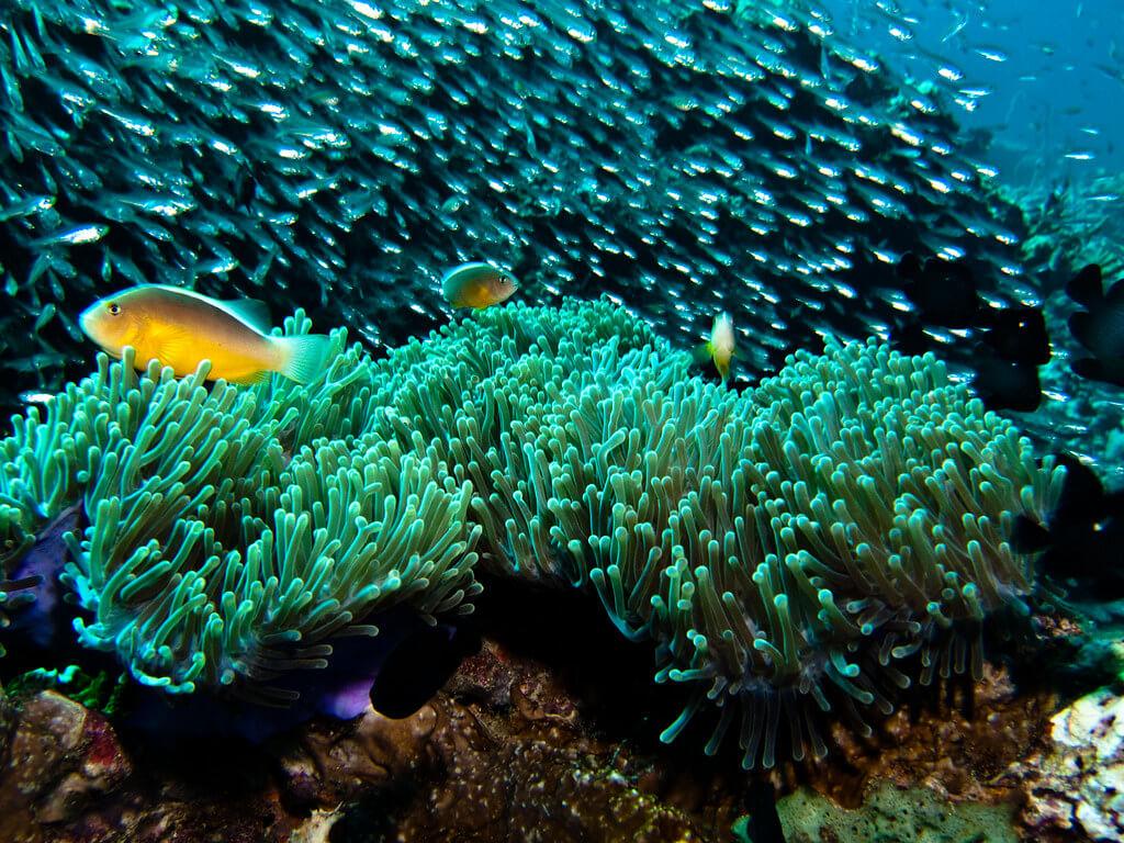 Ko Phi Phi diving