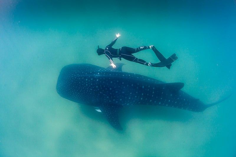 Image of Zanzibar diving