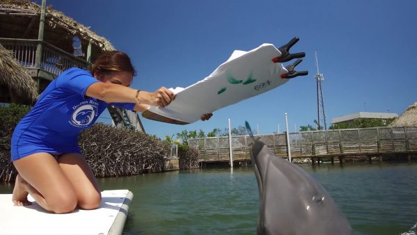 Caladesi Island Snorkel with dolphins In Clearwater Florida