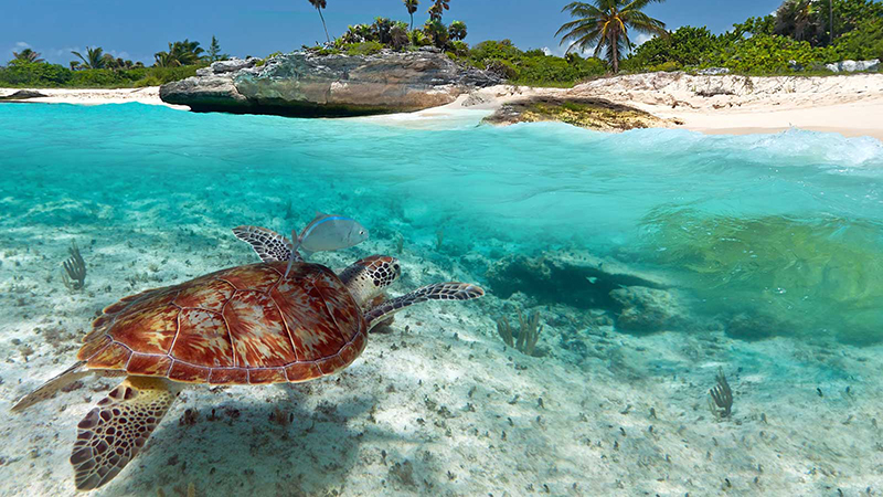 Costa Maya Scuba Diving