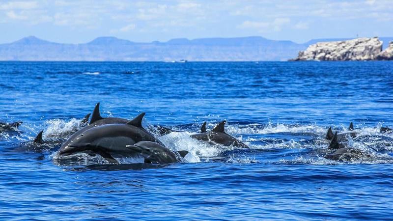 Best Diving Sites in Baja California