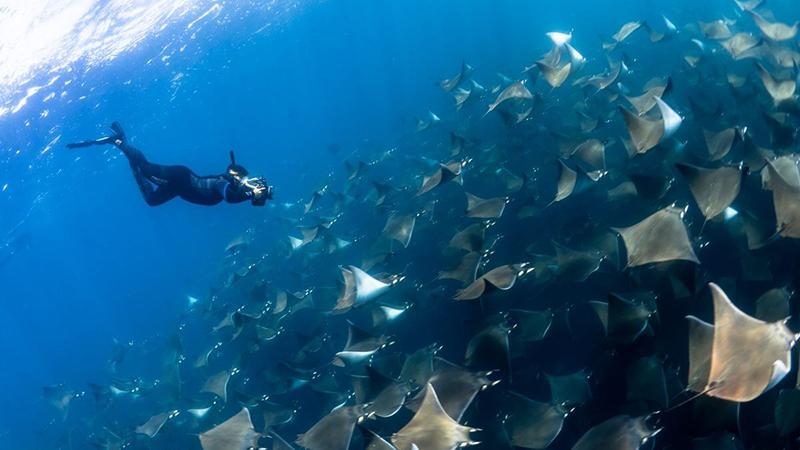 Scuba Diving at Baja California