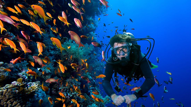 What is so special about scuba dive in Cancun