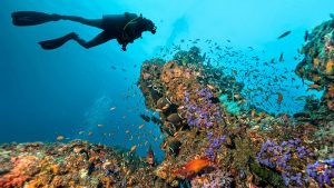 A Quick Guide to Scuba Diving in the Florida Keys