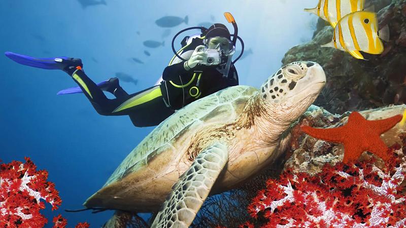Scuba Diving in Marathon